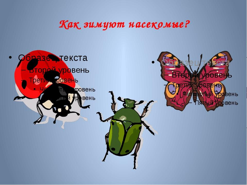Как зимуют насекомые?