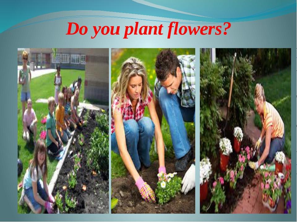 Do you plant flowers?