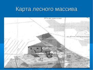 Карта лесного массива
