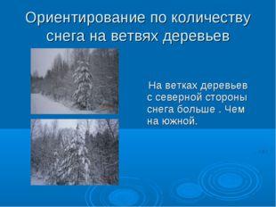 Ориентирование по количеству снега на ветвях деревьев На ветках деревьев с се