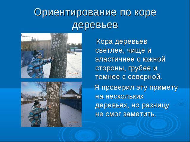 Ориентирование по коре деревьев Кора деревьев светлее, чище и эластичнее с юж...
