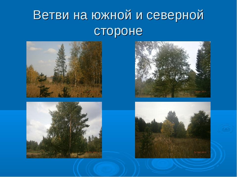Ветви на южной и северной стороне