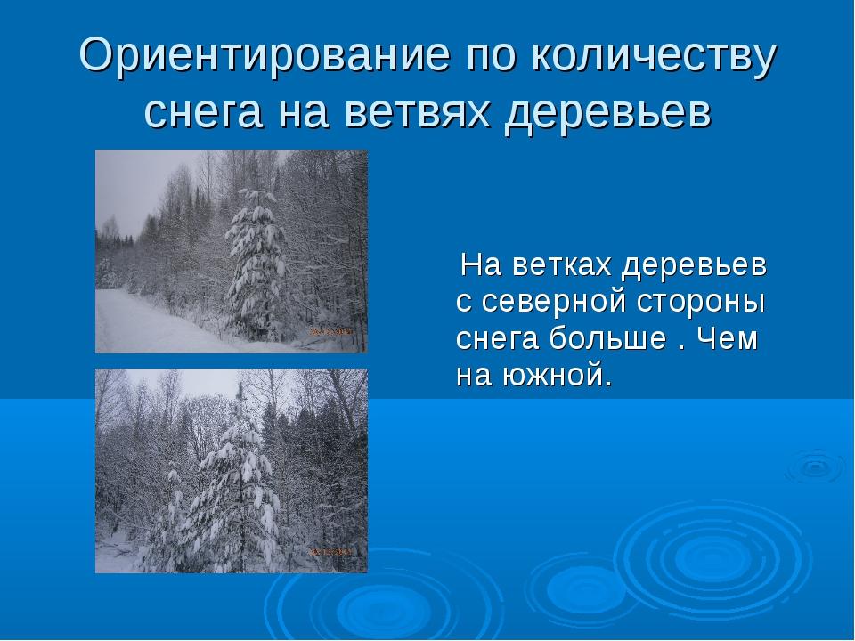 Ориентирование по количеству снега на ветвях деревьев На ветках деревьев с се...