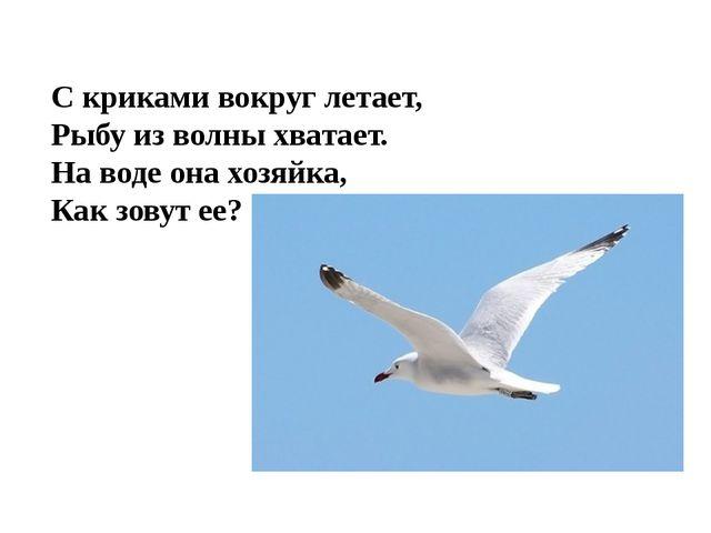 С криками вокруг летает, Рыбу из волны хватает. На воде она хозяйка, Как зову...