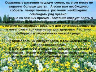 Сорванные растения не дадут семян, на этом месте не зацветут больше цветы. А