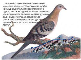 В одной стране жили необыкновенно красивые птицы – странствующие голуби. Гро