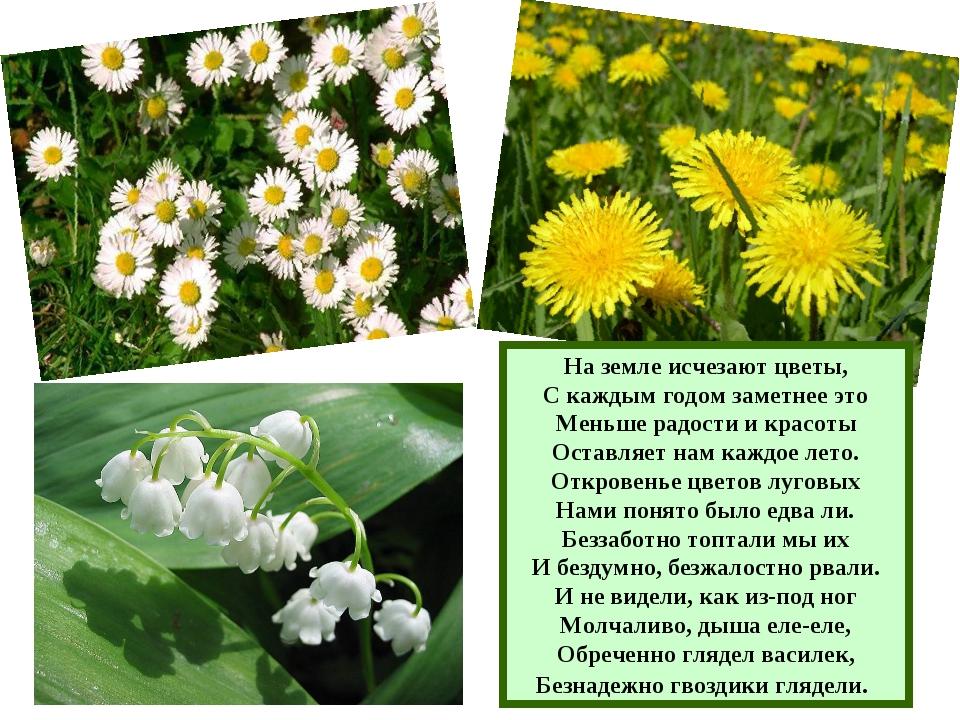 На земле исчезают цветы, С каждым годом заметнее это Меньше радости и красоты...