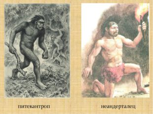 питекантроп неандерталец