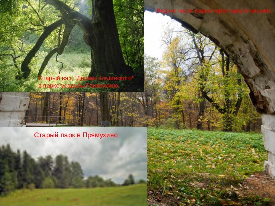 """Вид на часть парка через арку в насыпи. Старый парк в Прямухино Старый вяз. """"..."""