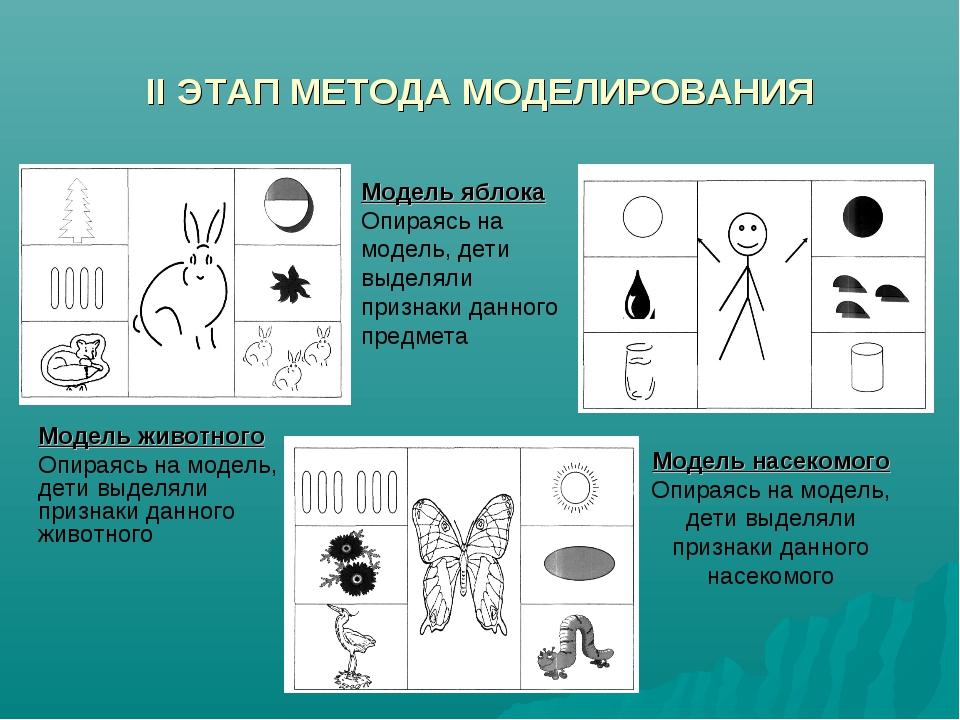 II ЭТАП МЕТОДА МОДЕЛИРОВАНИЯ Модель животного Опираясь на модель, дети выделя...