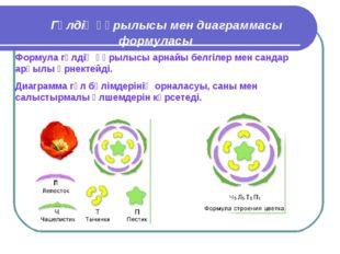 Гүлдің құрылысы мен диаграммасы формуласы Формула гүлдің құрылысы арнайы бел