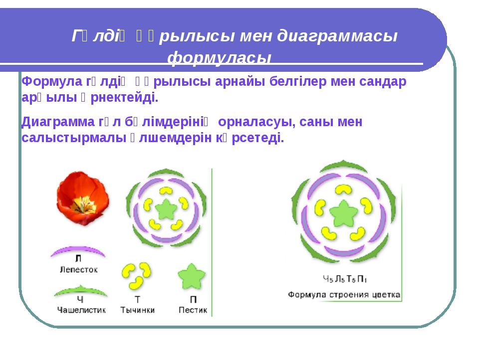 Гүлдің құрылысы мен диаграммасы формуласы Формула гүлдің құрылысы арнайы бел...