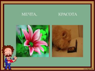 МЕЧТА, КРАСОТА