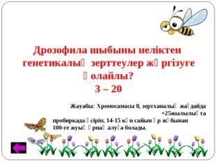 Дрозофила шыбыны неліктен генетикалық зерттеулер жүргізуге қолайлы? 3 – 20 Жа