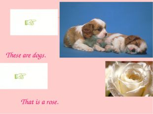 These are dogs. That is a rose.