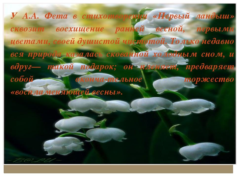 У А.А. Фета в стихотворении «Первый ландыш» сквозит восхищение ранней весной,...