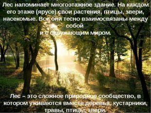 Лес напоминает многоэтажное здание. На каждом его этаже (ярусе) свои растения