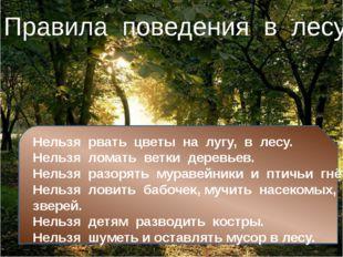 Нельзя рвать цветы на лугу, в лесу. Нельзя ломать ветки деревьев. Н