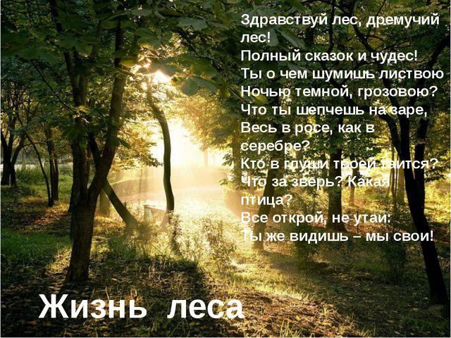 Жизнь леса Здравствуй лес, дремучий лес! Полный сказок и чудес! Ты о чем шуми...