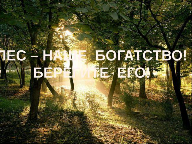 Есть просто храм. Есть храм науки. А есть ещё природы храм – С леса...