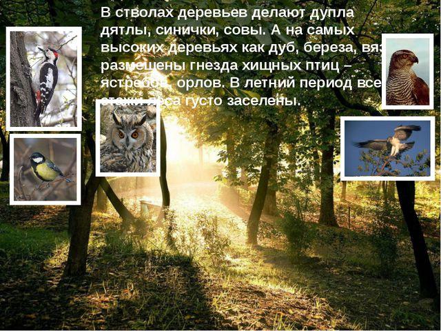В стволах деревьев делают дупла дятлы, синички, совы. А на самых высоких дере...