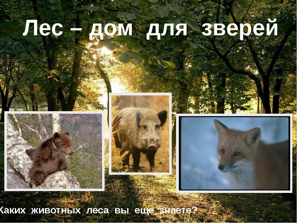 Лес – дом для зверей Каких животных леса вы еще знаете?