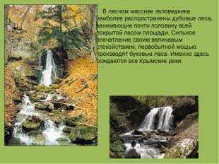 В лесном массиве заповедника наиболее распространены дубовые леса, занимающи