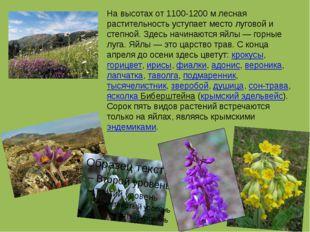 На высотах от 1100-1200 м лесная растительность уступает место луговой и степ