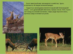 Богат животный мир заповедного хозяйства. Здесь встречается 36 видов млекопи