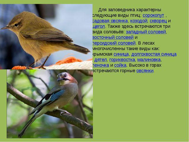Для заповедника характерны следующие виды птиц: сорокопут , садовая овсянка,...