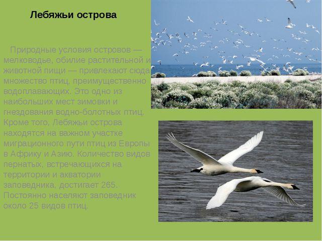 Лебяжьи острова  Природные условия островов— мелководье, обилие растительн...