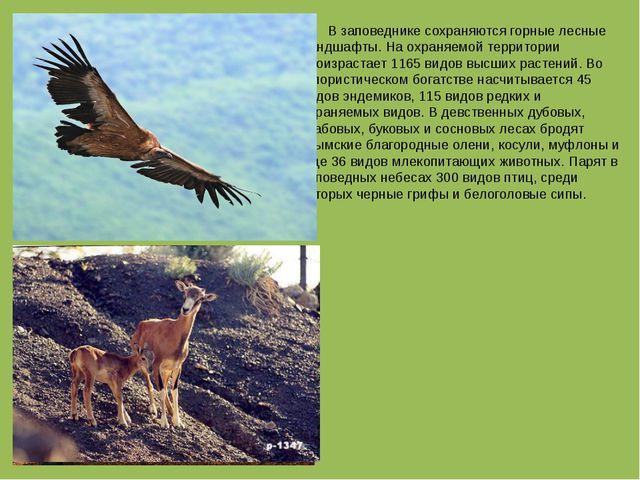 В заповеднике сохраняются горные лесные ландшафты. На охраняемой территории...