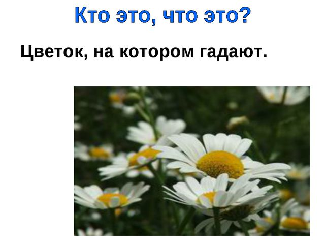 Цветок, на котором гадают.