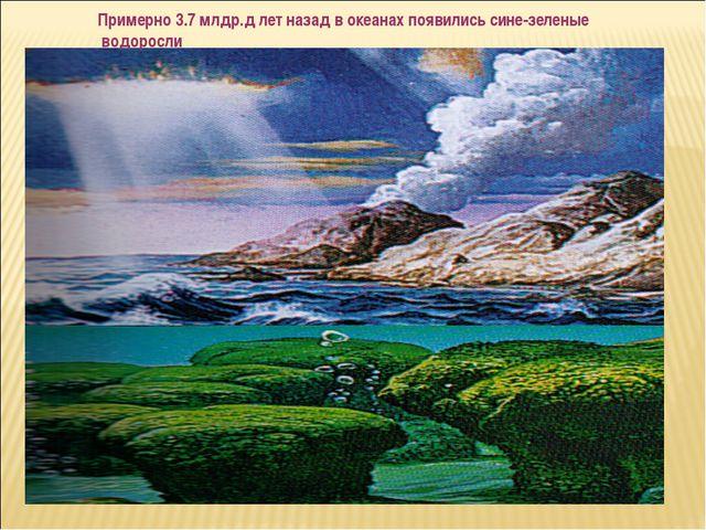 Примерно 3.7 млдр.д лет назад в океанах появились сине-зеленые водоросли