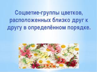 Соцветие-группы цветков, расположенных близко друг к другу в определённом пор