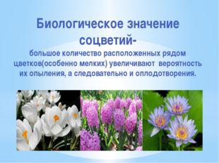 Биологическое значение соцветий- большое количество расположенных рядом цветк