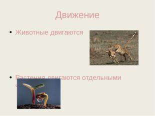 Движение Животные двигаются Растения двигаются отдельными частями