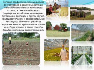 Сегодня профессия агронома весьма востребована в различных крупных сельскохоз