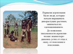 Первыми агрономами были люди, которые начали выращивать дикорастущие растени