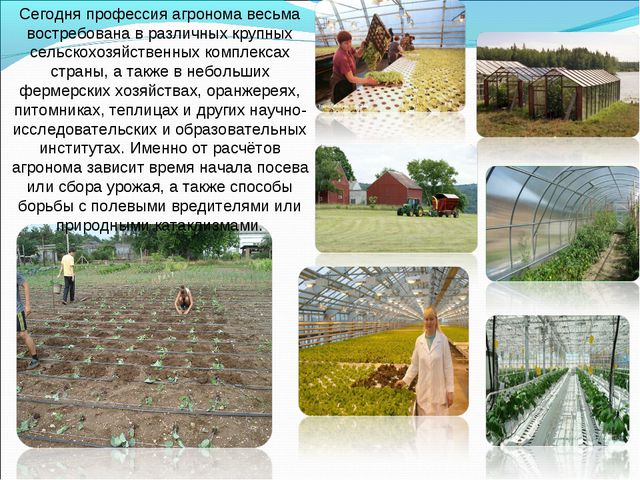 Сегодня профессия агронома весьма востребована в различных крупных сельскохоз...