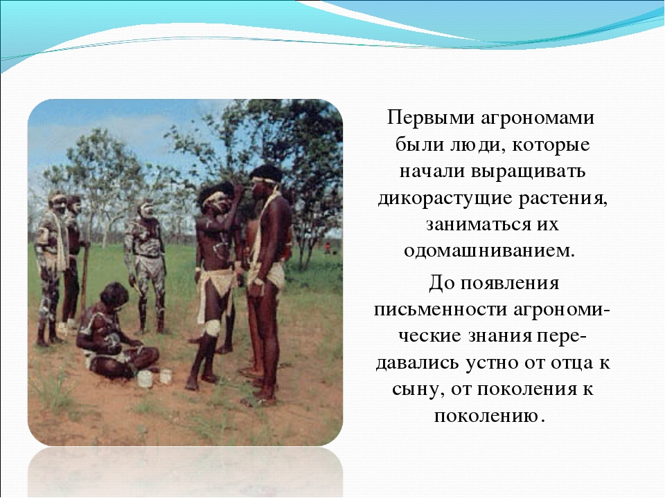 Первыми агрономами были люди, которые начали выращивать дикорастущие растени...