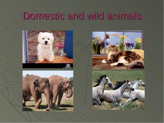 Domestic and wild animals