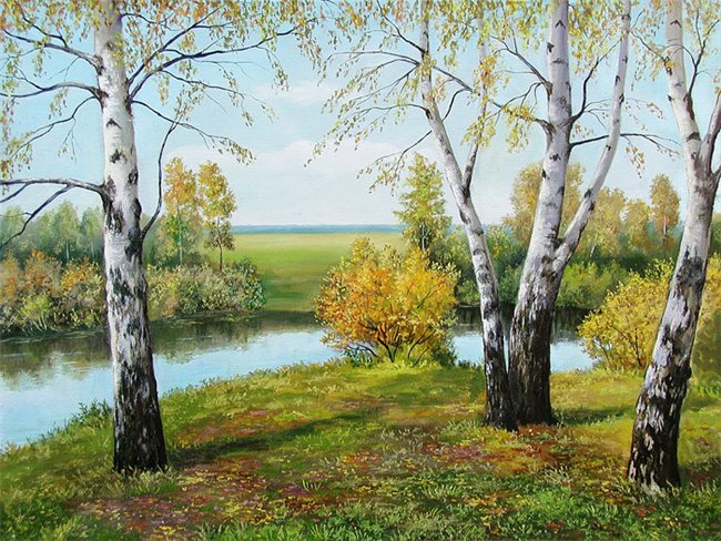Картина: картина на заказ Березы 50х70 холст масло 15000 руб.