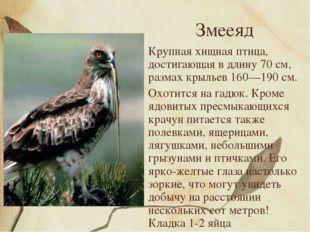 Змееяд Крупная хищная птица, достигающая в длину 70 см, размах крыльев 160—19