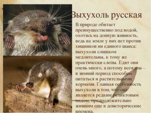 Выхухоль русская В природе обитает преимущественно под водой, охотясь на донн