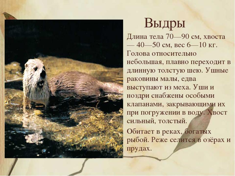 Выдры Длина тела 70—90 см, хвоста — 40—50 см, вес 6—10 кг. Голова относительн...