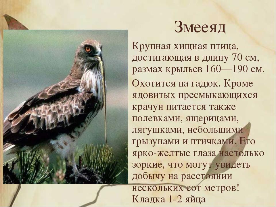 Змееяд Крупная хищная птица, достигающая в длину 70 см, размах крыльев 160—19...