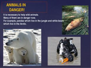 ANIMALS IN DANGER! It is necessary to help wild animals. Many of them are in