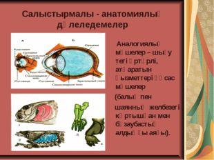 Салыстырмалы - анатомиялық дәлеледемелер Аналогиялық мүшелер – шығу тегі әртү