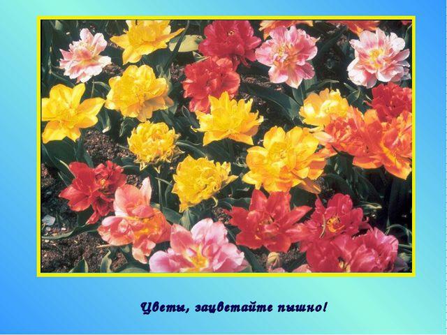 Цветы, зацветайте пышно!